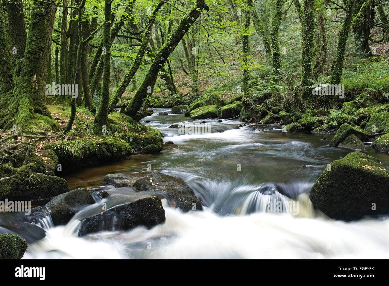 Waterfall, Golitha Falls - On the southern edge of Bodmin Moor - Cornwall August - Stock Image