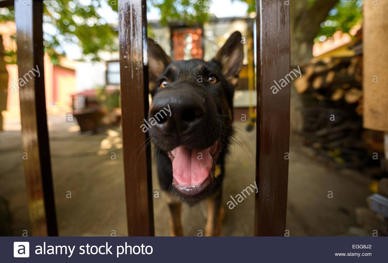 Grown up dog outside - Stock Image