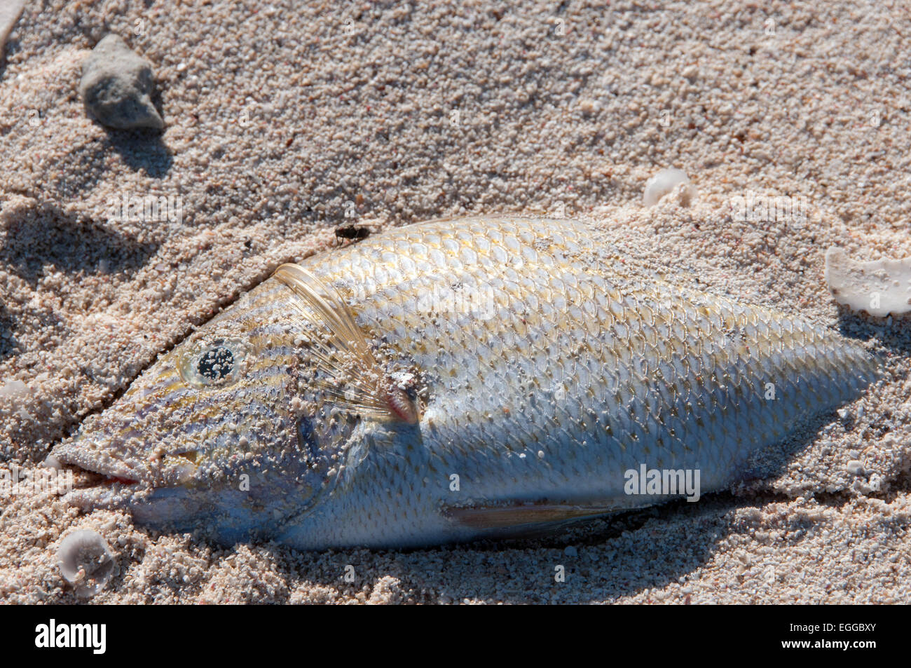 Dead fish - Stock Image