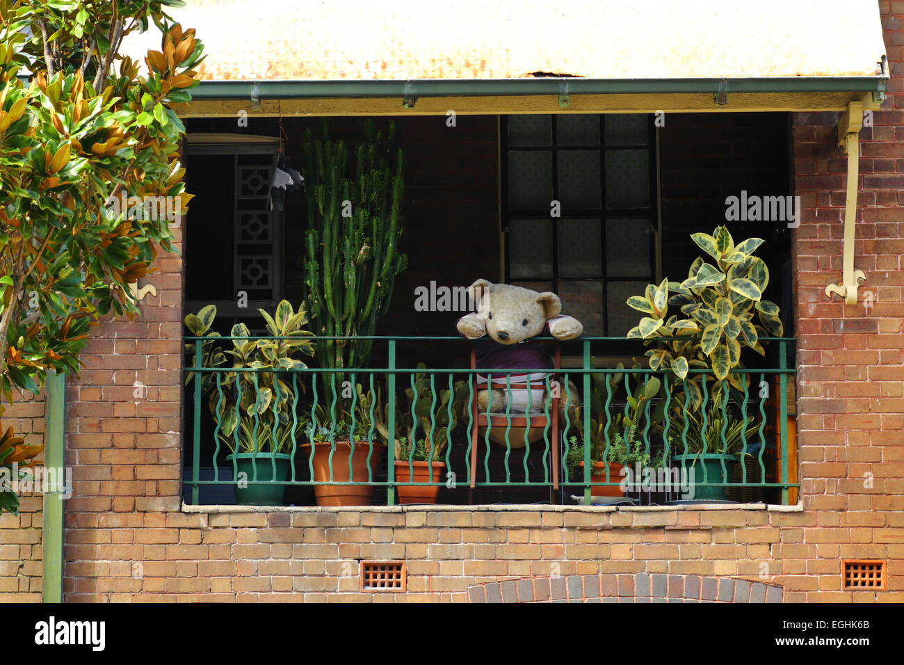A large teddy bear perched on a balcony patiently waiting for its owner to return home from work in Sydney, NSW, - Stock Image