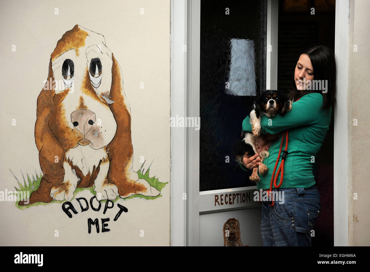 A rescued dog new arrival at the Many Tears Animal Rescue centre near Llanelli, S. Wales UK - Stock Image
