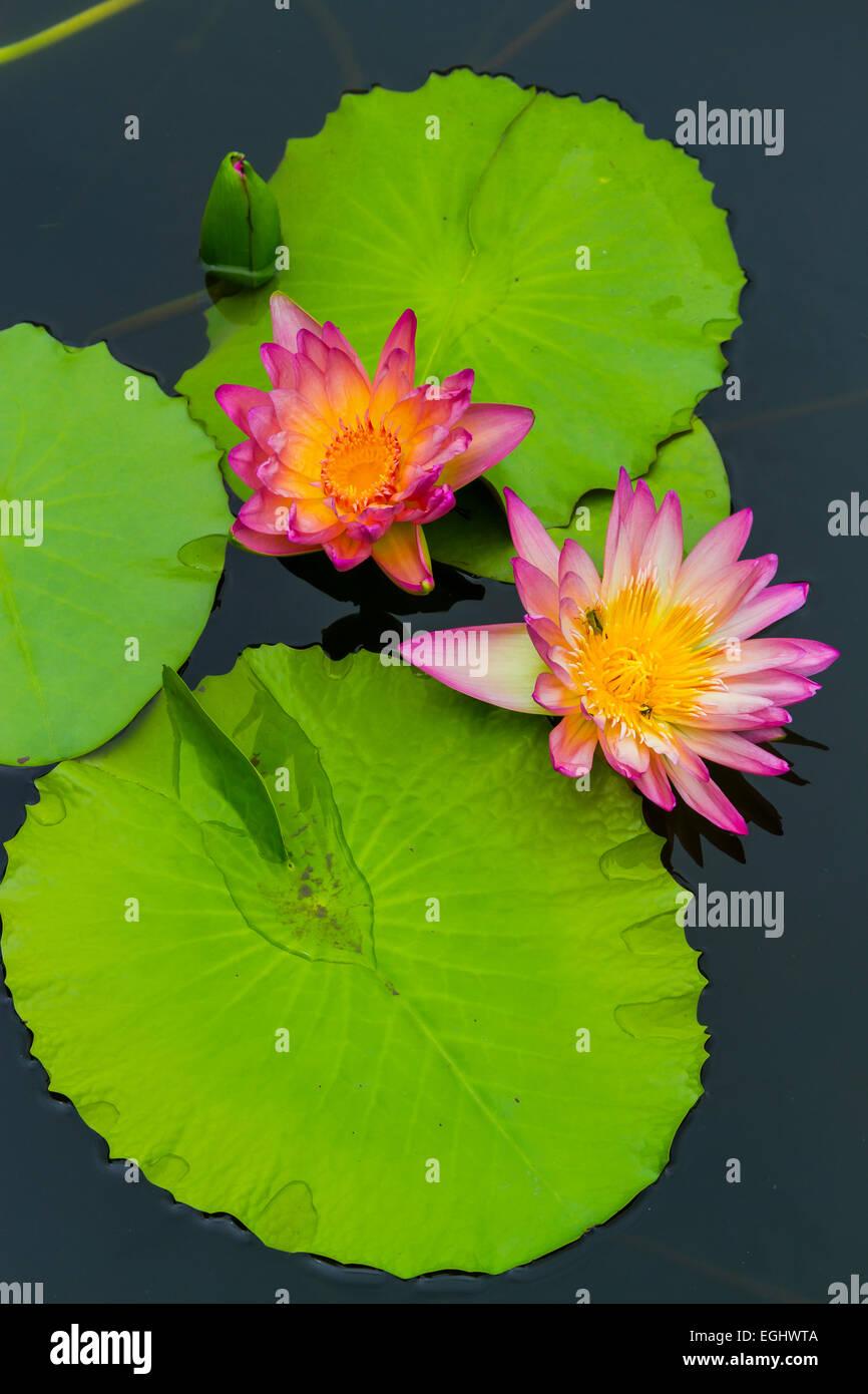 Reproduction leaves water plants stock photos reproduction leaves flowers and leaves stock image izmirmasajfo