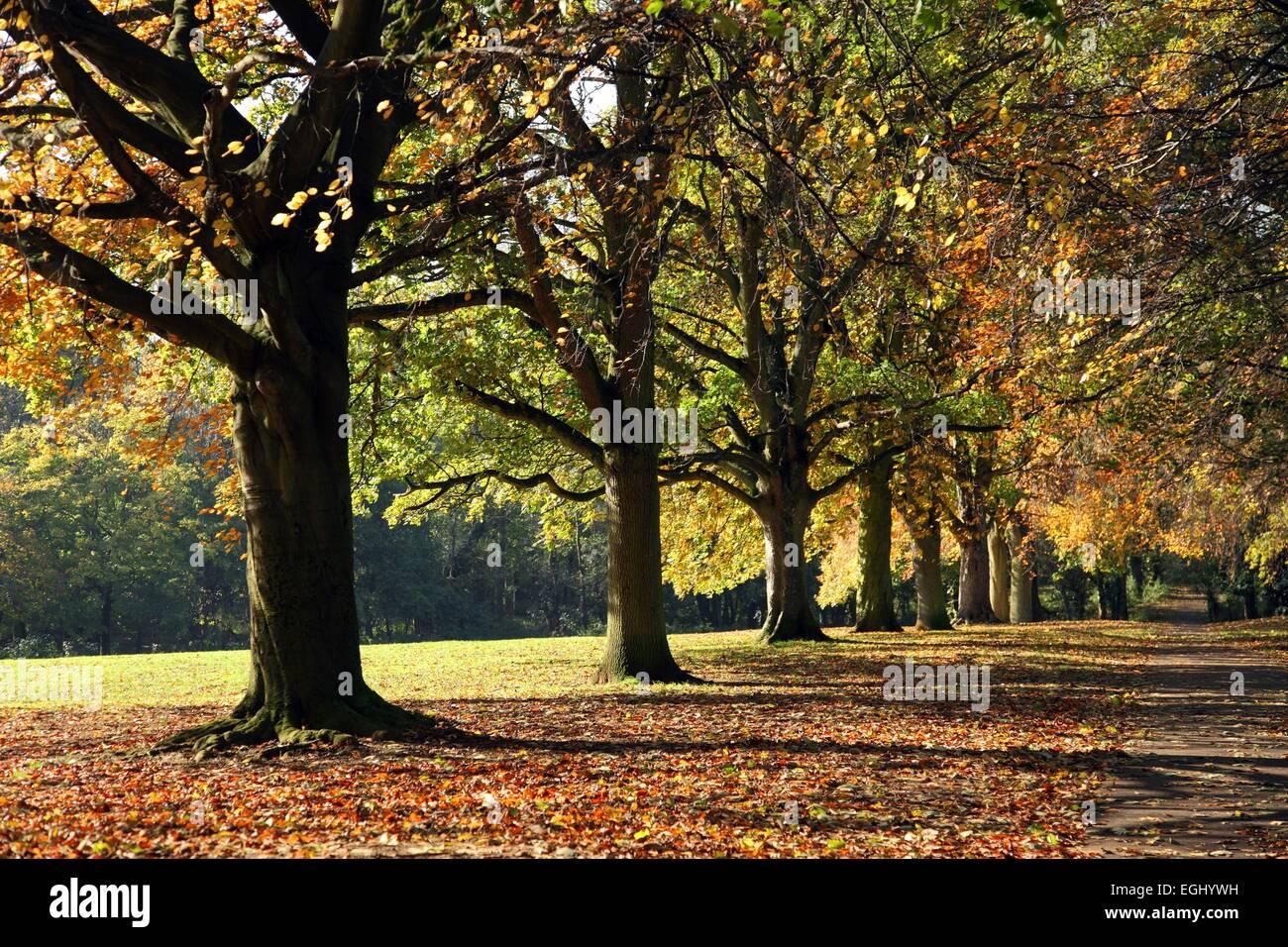 Abington Park, Weston Favell, Northampton - Stock Image