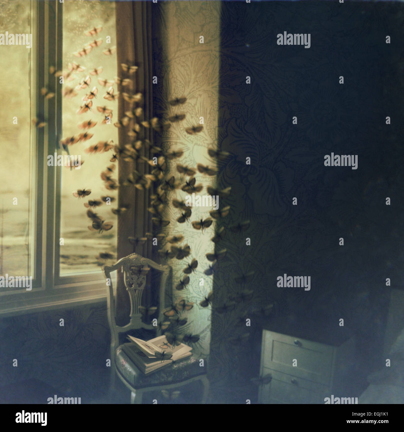 butterflies flying from opened book - Stock Image