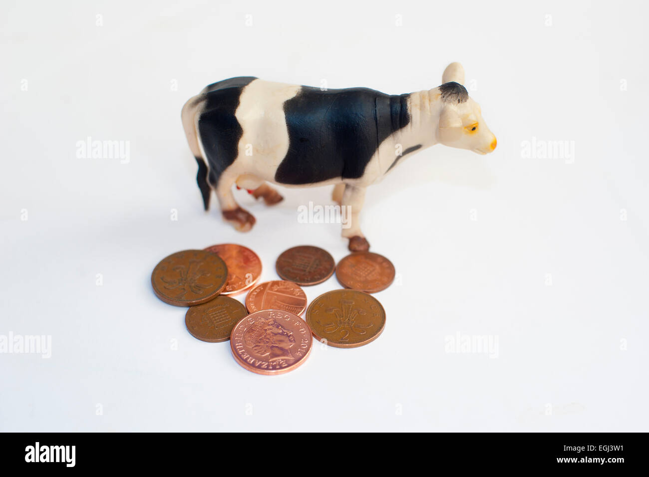 a cow standing and copper coins pennies symbolizing the decline in British agriculture isolated on a white background - Stock Image