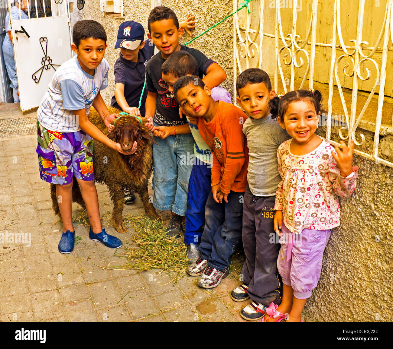 Kids with their sheep on Eid al-Adha in Fes Morocco Africa - Stock Image