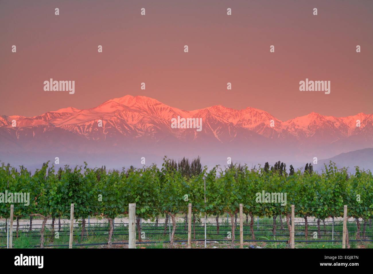 Snow-covered Plata Peak (20,341 ft.) and vineyards, near Tupungato, Mendoza Province, Argentina - Stock Image