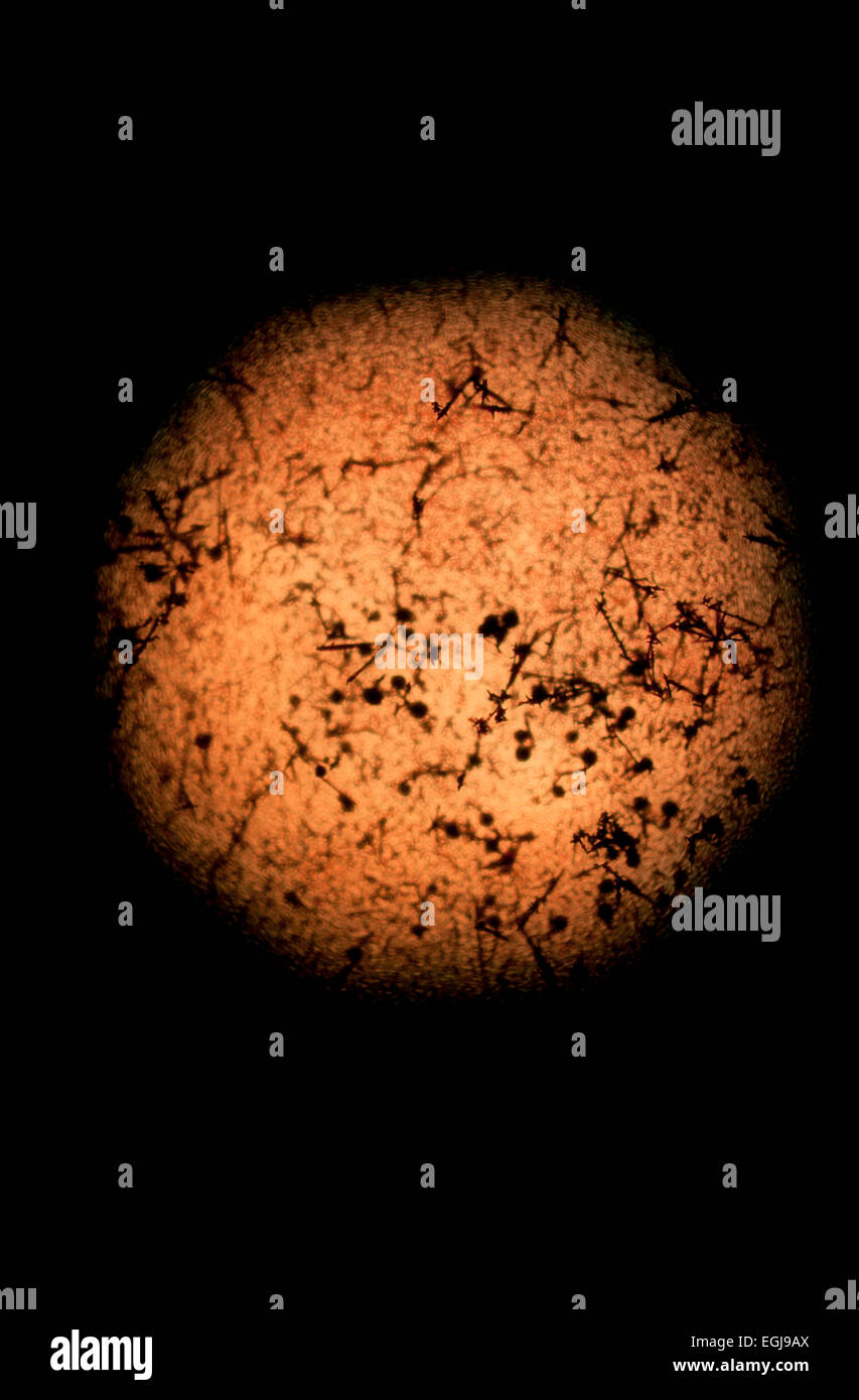 Abstract microscopic image. Dust and pollen in pond water. - Stock Image