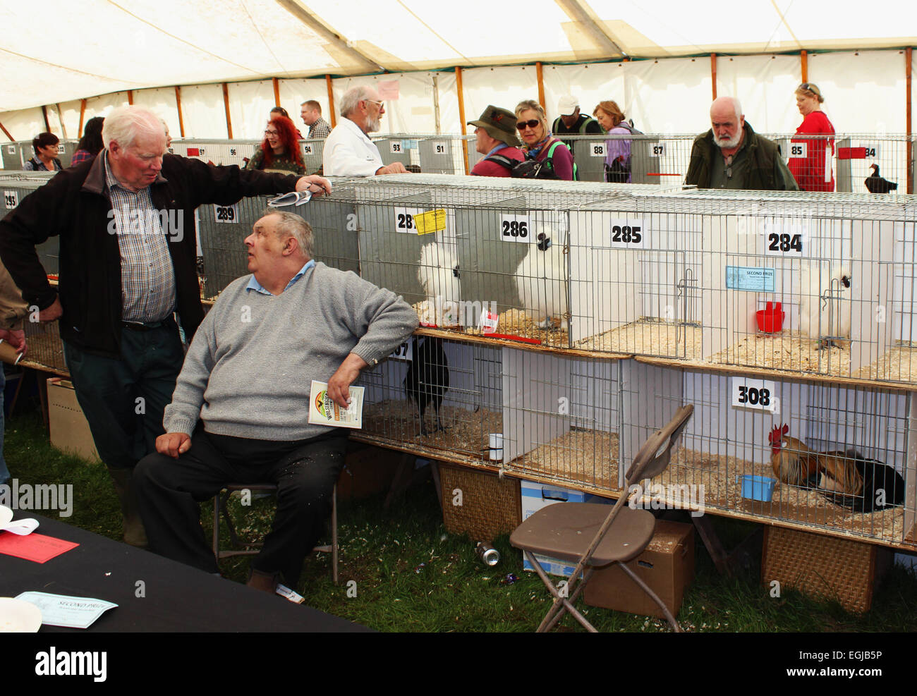 Two poultry breeders talking next to competition entrants at the Northumberland County Show - Stock Image