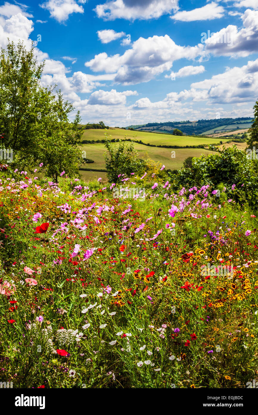 Summer wildflowers with rolling English countryside beyond. - Stock Image