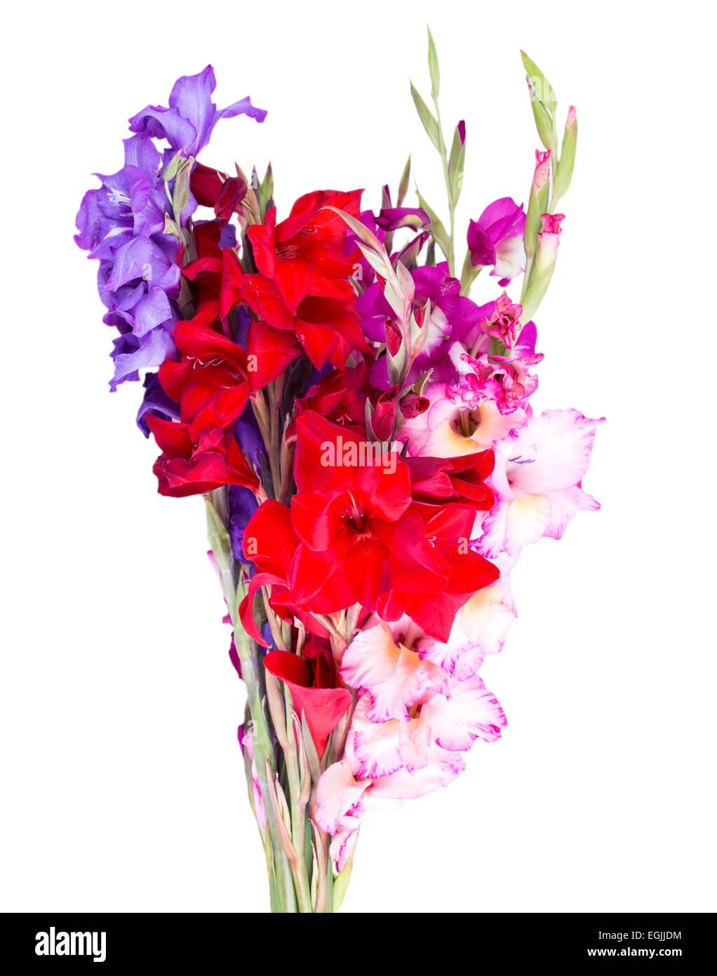 multicolored flowers gladiolus isolated on white background Stock ...