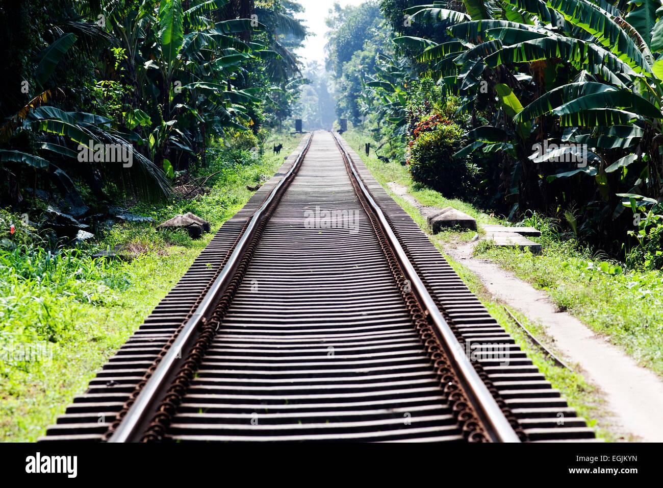 Railway tracks in jungle - Stock Image