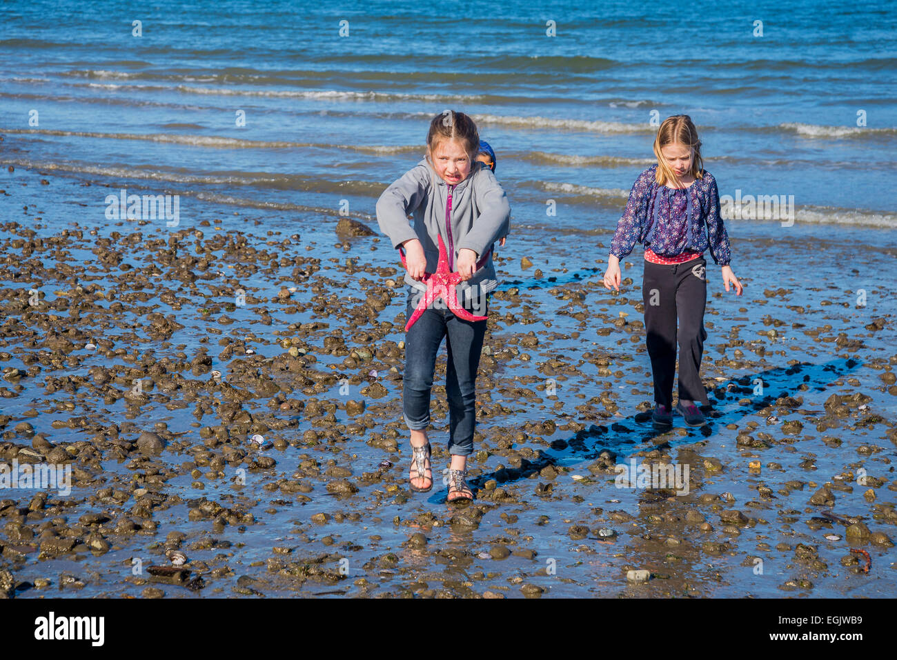 Young girl with dead starfish, Jericho Beach, Vancouver, British Columbia, Canada, - Stock Image