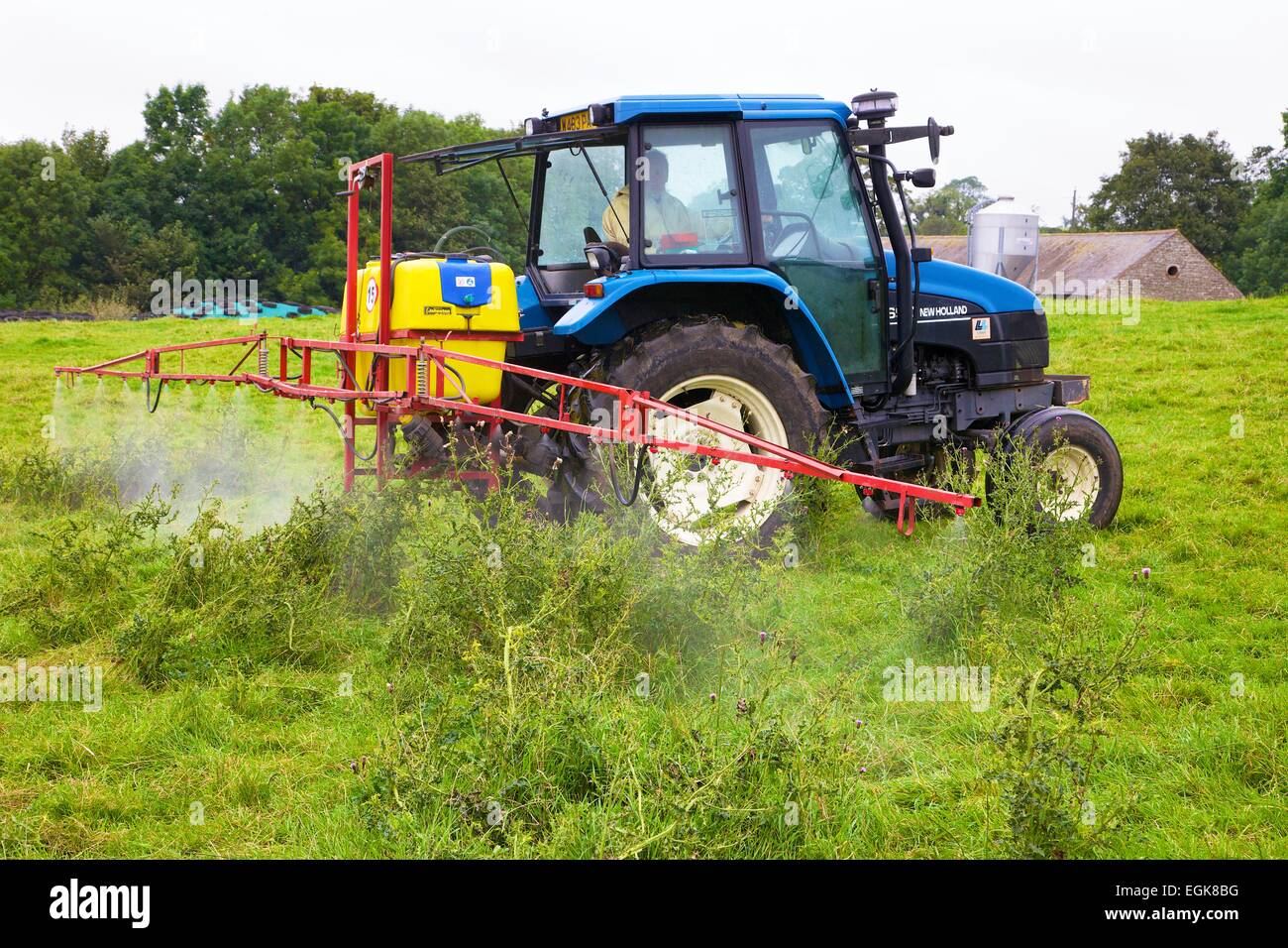 T90 New Holland Tractor with sprayer, spraying thistles. - Stock Image