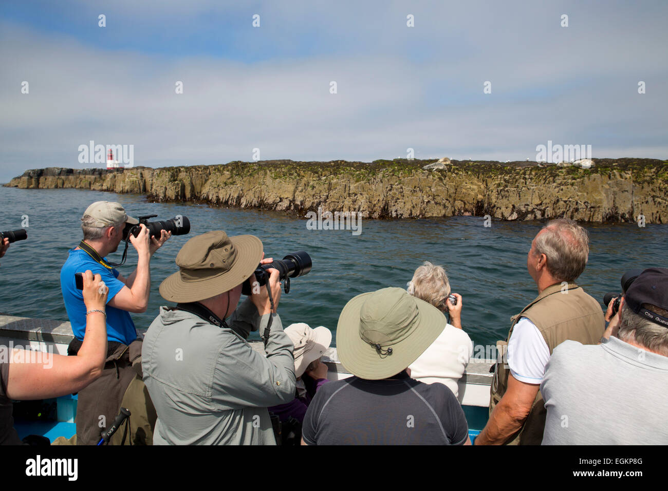 Photographers; Taking Pictures of Seals Farne Islands Northumberland; UK - Stock Image