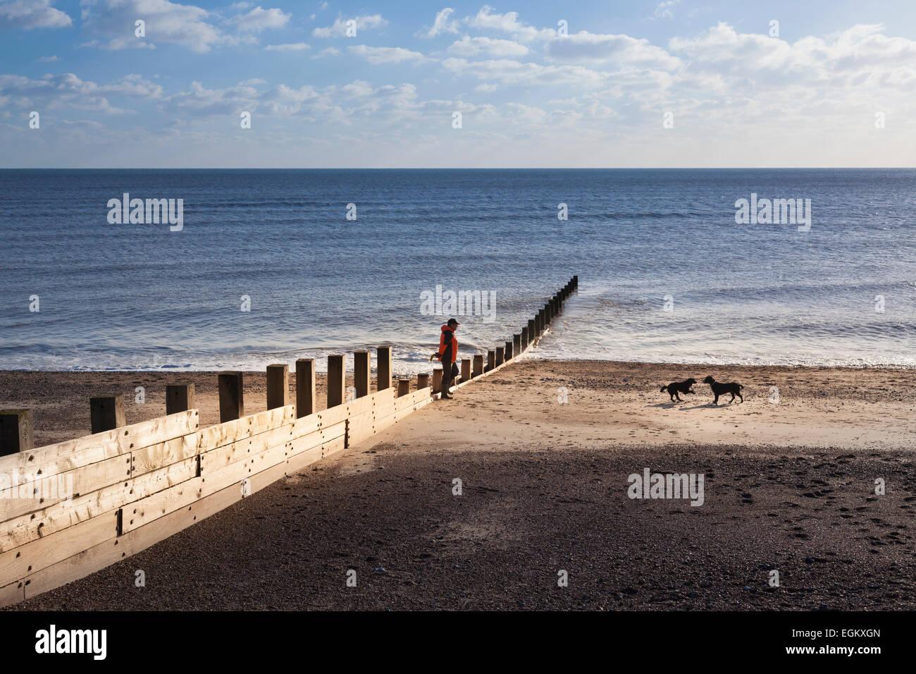 Man walking dogs on deserted winter beach past breakwater in winter Stock Photo