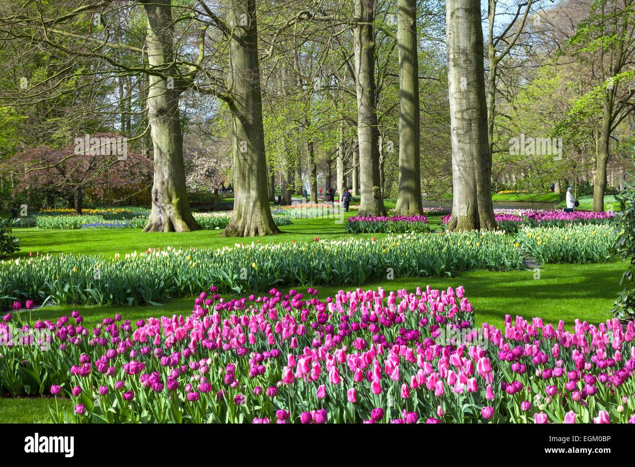 Flower Garden Keukenhof - Stock Image