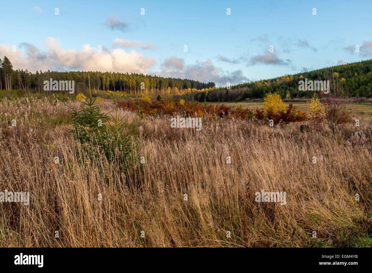 Sauerland area, mid-mountain area, high heath area, Stock Photo