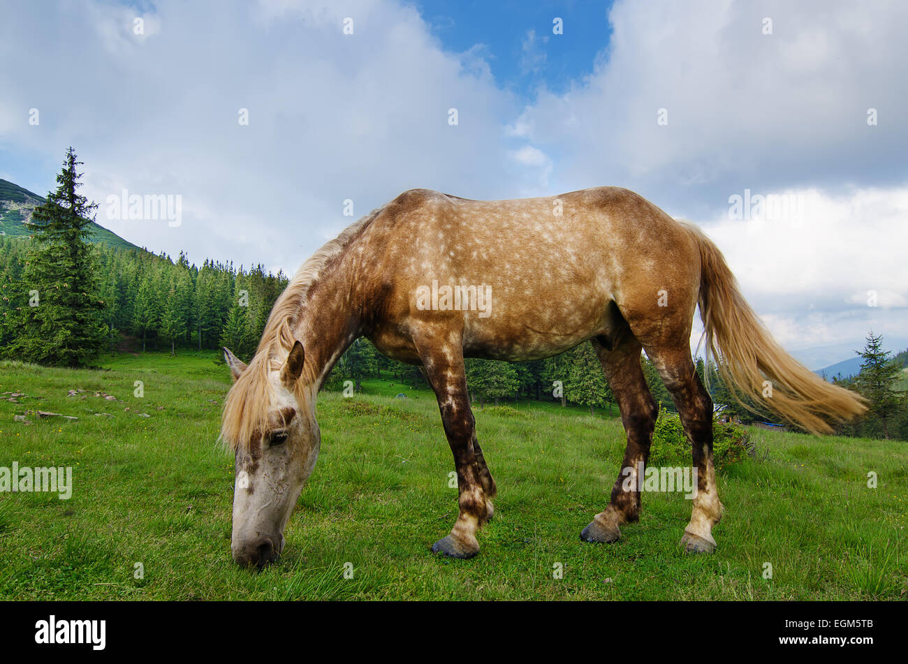Bay horse grazes in the mountains - Stock Image