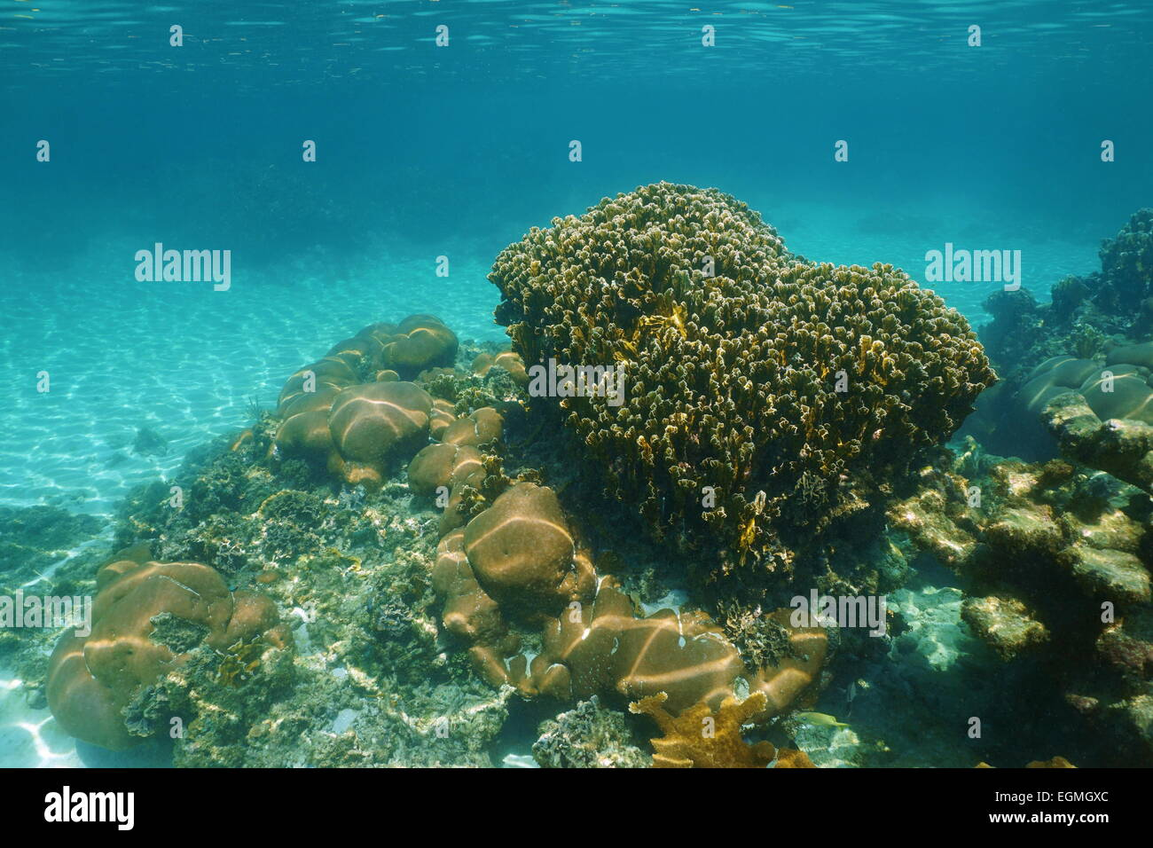Underwater scenery of a stony coral reef in the Caribbean sea - Stock Image