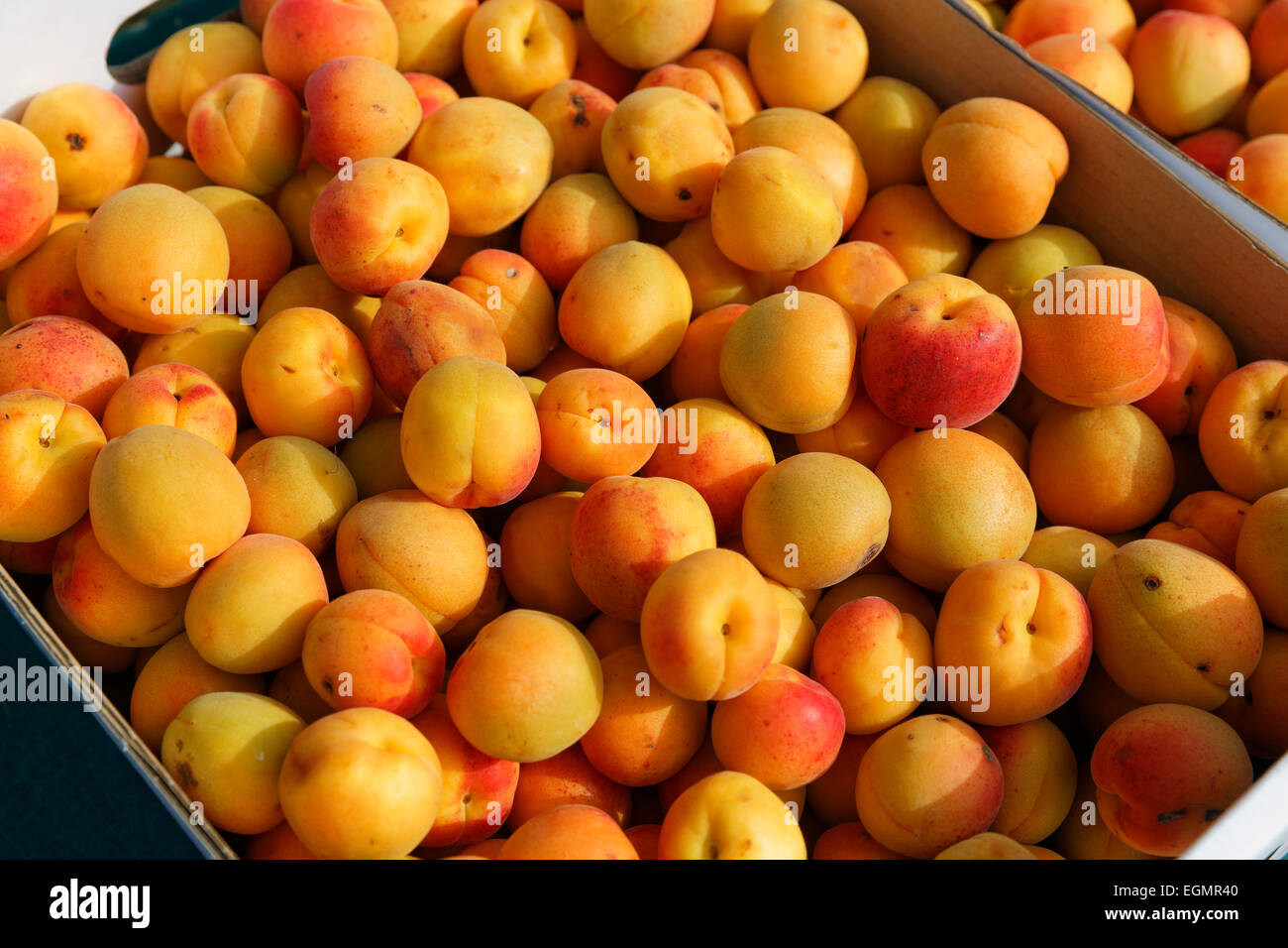 Wachau apricots, Spitz, Wachau, Lower Austria, Austria - Stock Image