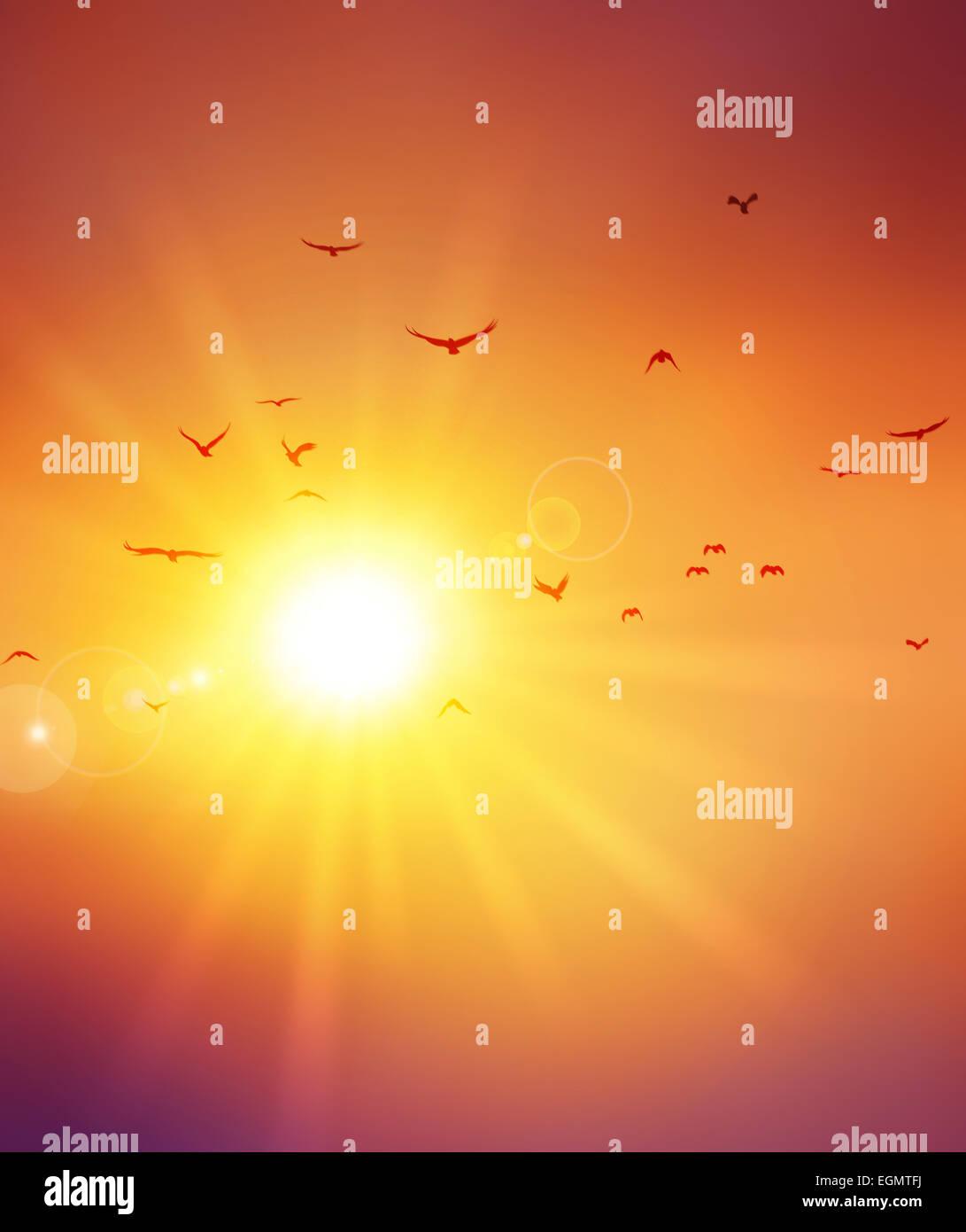 Summer sunset. Birds flight ahead the setting sun - Stock Image