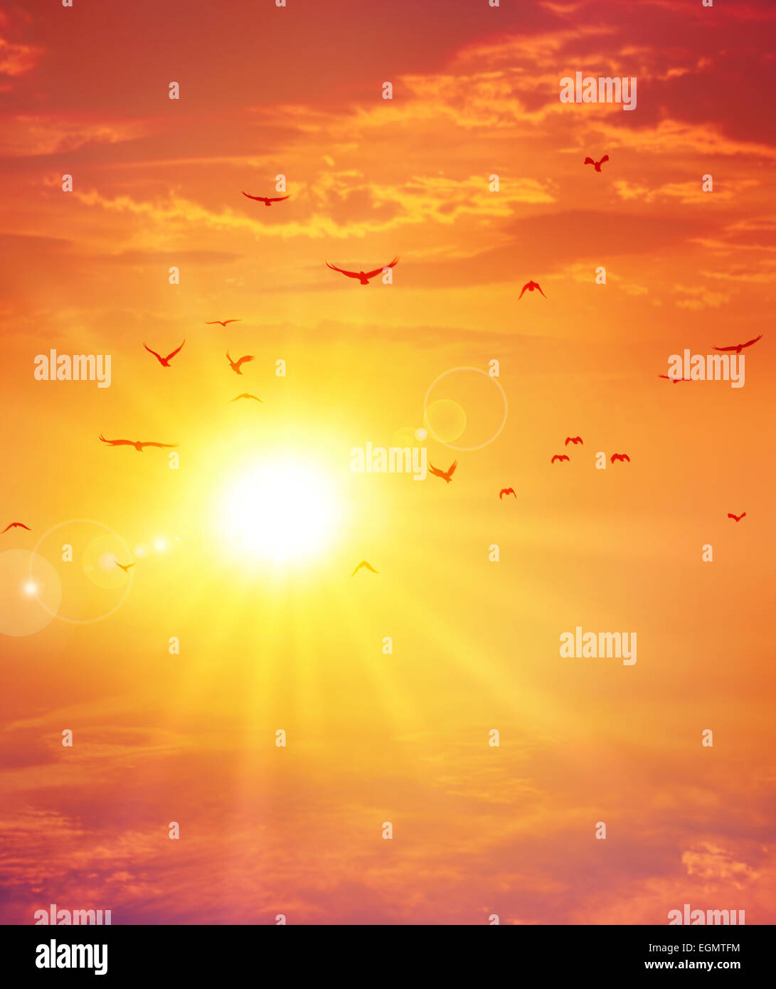 Summer sunset. Birds flight ahead the setting sun in a cloudy sky background - Stock Image