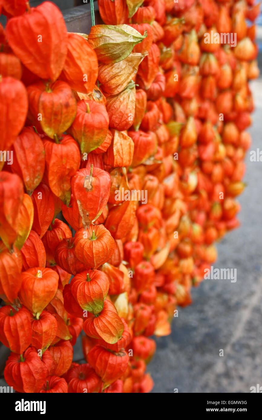 chinese lanterns plants how to grow