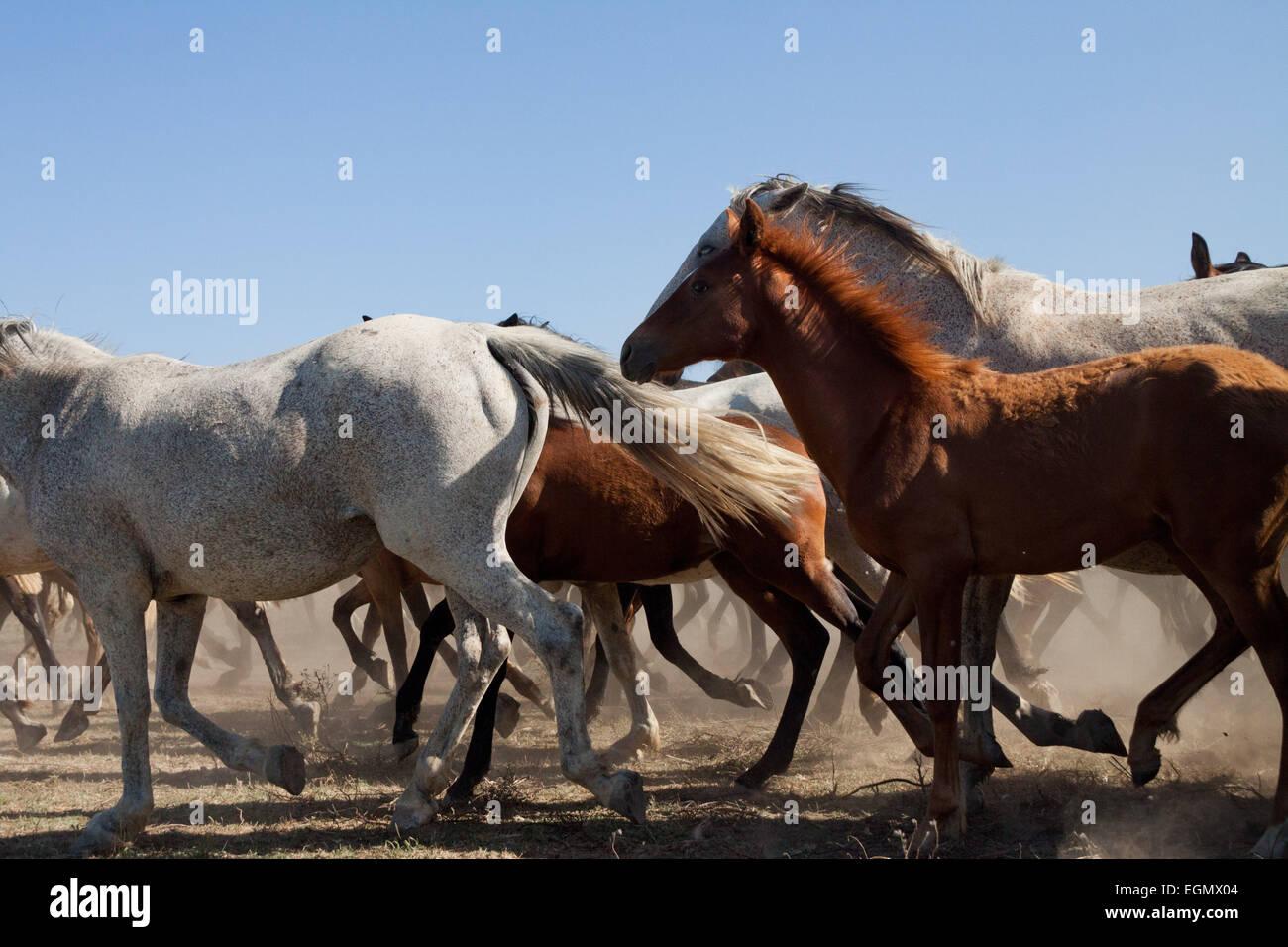 Herd Of Wild Horses Running Free Stock Photo Alamy