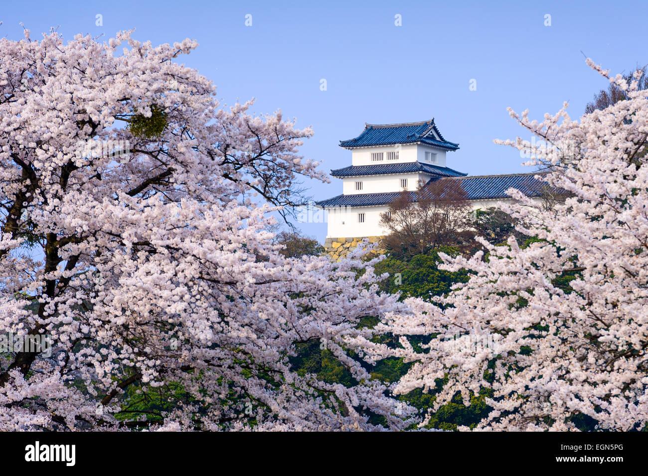 Hikone, Japan at Hikone Castle in the spring. - Stock Image