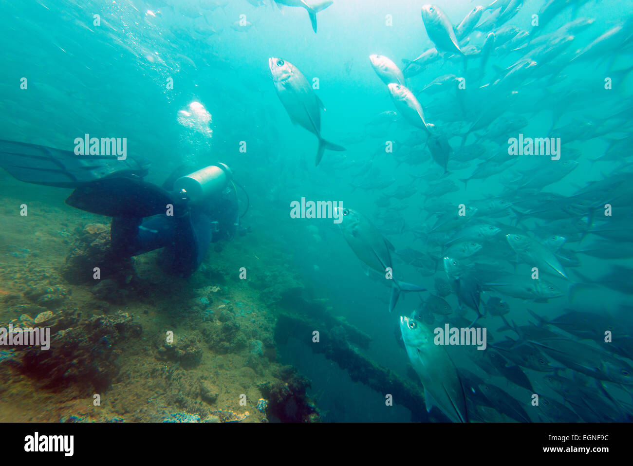 South East Asia, Philippines, Luzon, Subic Bay, scuba diving wreck dive - Stock Image