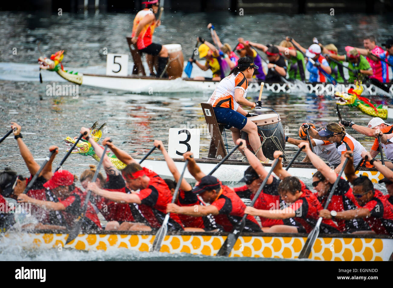 Sydney, Australia. 28th February, 2015. 3,000 paddlers from across Australia competed in the largest dragon boat - Stock Image