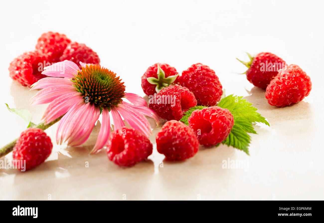 Raspberry, Rubus idaeus cultivar. Several berries arranges with a single Echinacea purpurea flower on white marble. Stock Photo