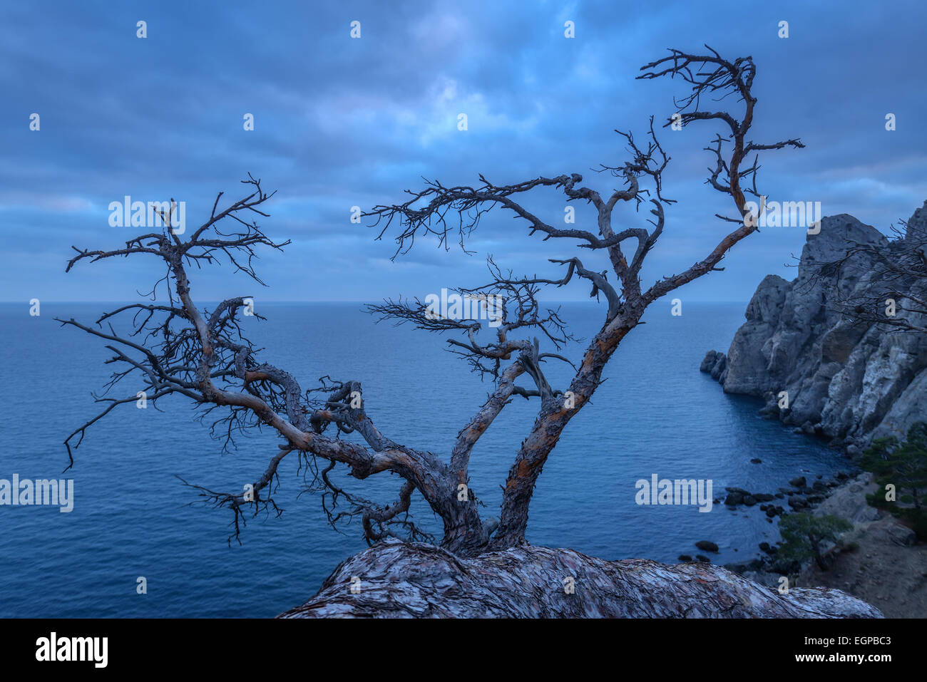 Tree on rock in Crimea - Stock Image