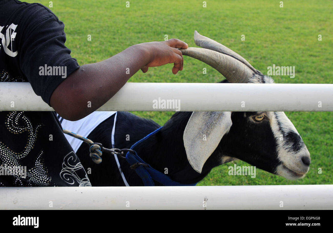 Goat and boy rest near racing track in village in Tobago. - Stock Image