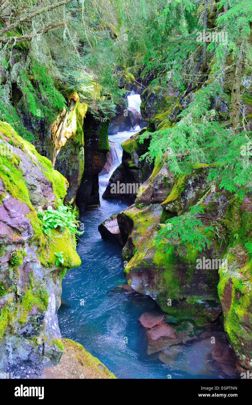 hidden waterfall along the Avalanche lake trail in Glacier National Park - Stock Image