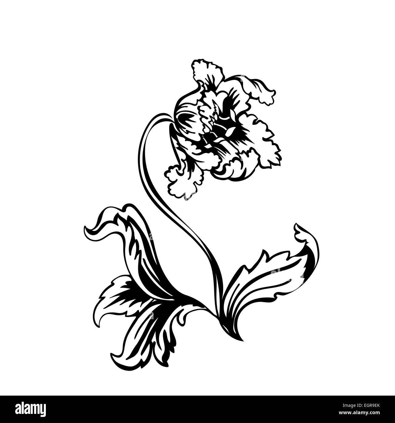 Flower tulip. Black outline on white background, vector illustration Stock Photo