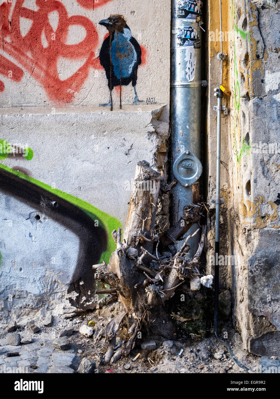 Berlin Urban street art and graffiti - black bird, drain-pipe and dead plant - Stock Image