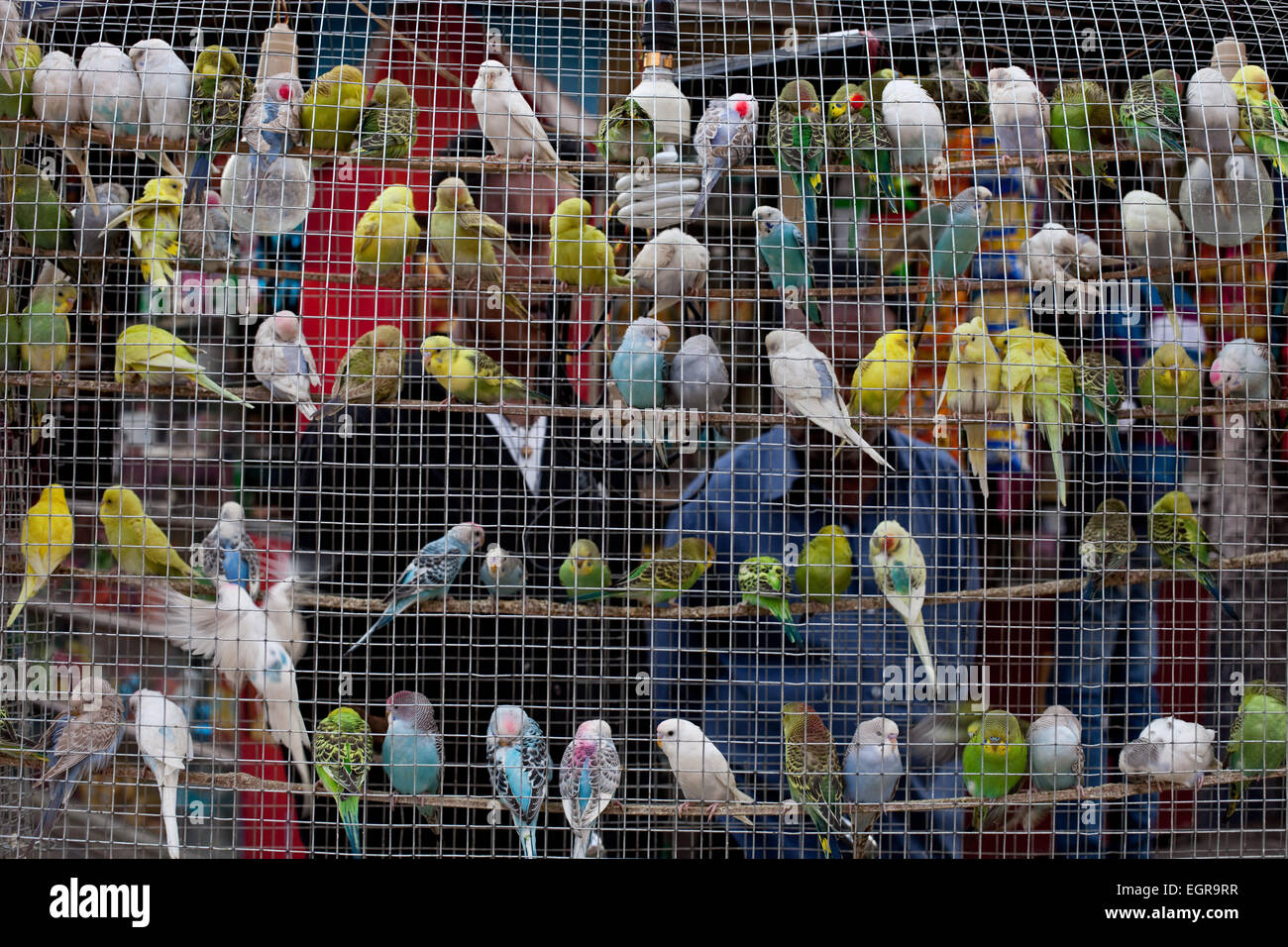 Love Birds Cage High Resolution Stock Photography And Images Alamy