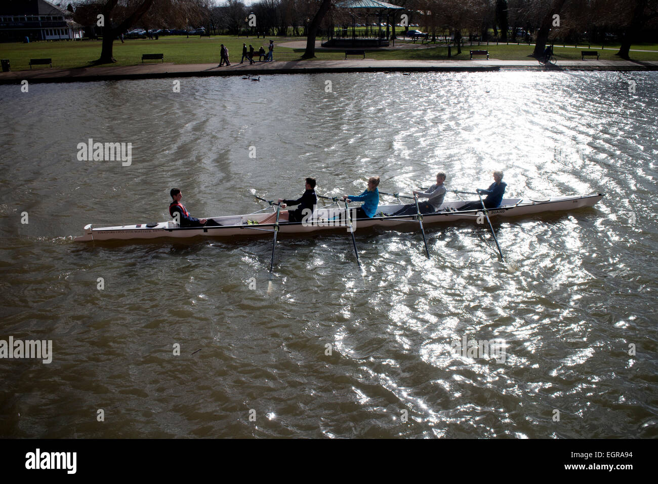 Coxed four rowing on the River Avon, Stratford-upon-Avon, UK - Stock Image