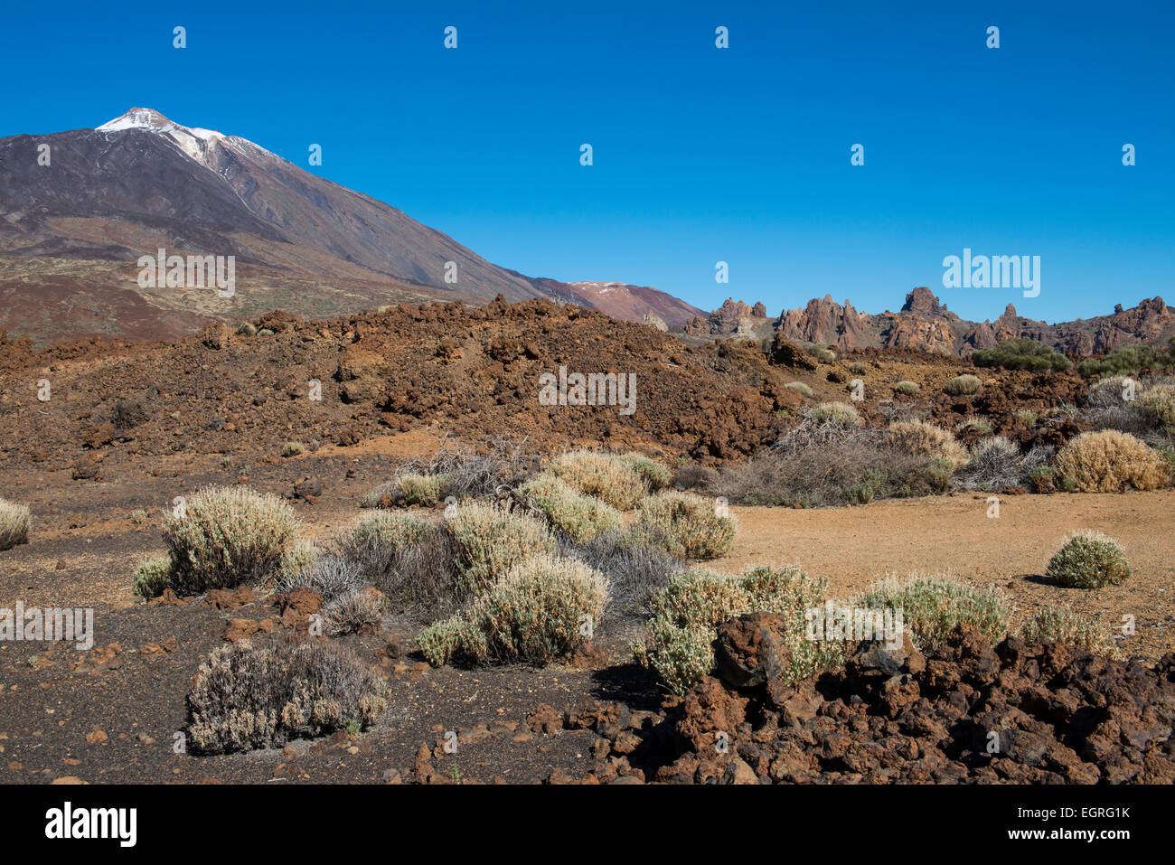 Lava Field with bushes El Teide on the island of Tenerife in Spain. - Stock Image