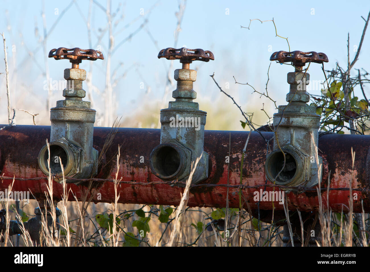 Abandoned 2-1/4  inch brass gate valves attached to manifold. - Stock Image