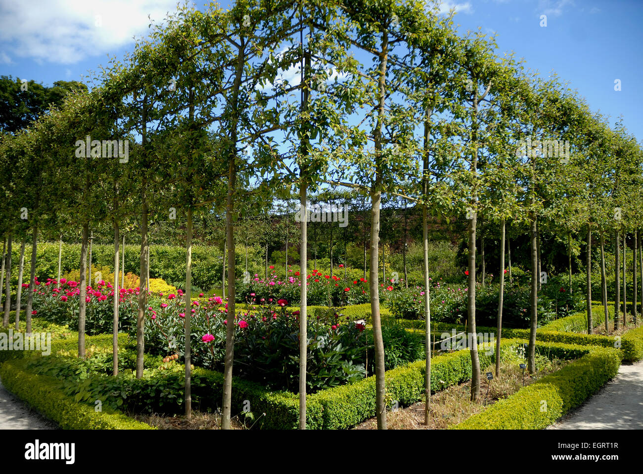 Espaliered Trees Stock Photos Espaliered Trees Stock Images Alamy