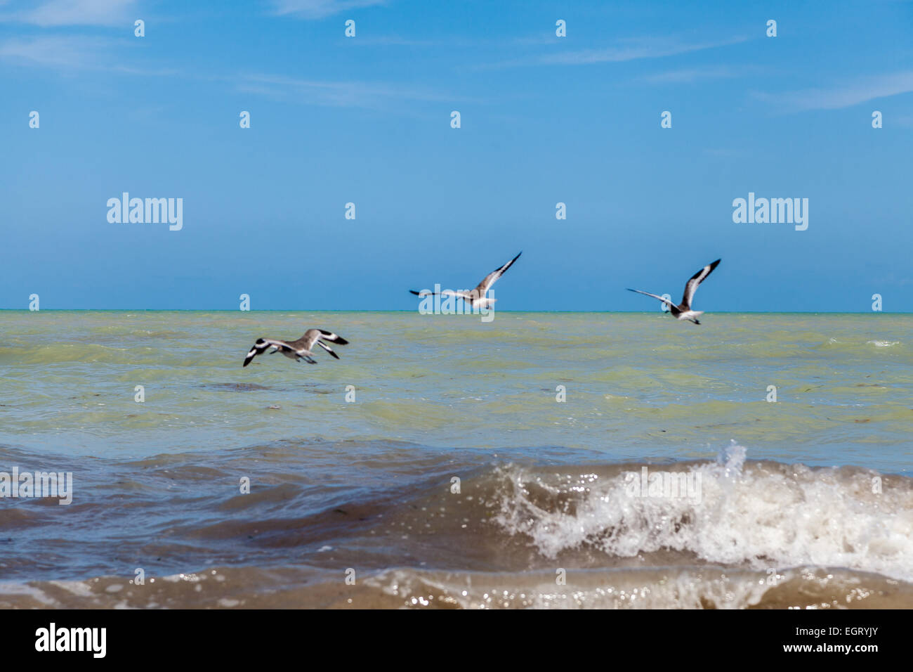 going fishing, birds fishing and playing in the waves of the ocean - Stock Image