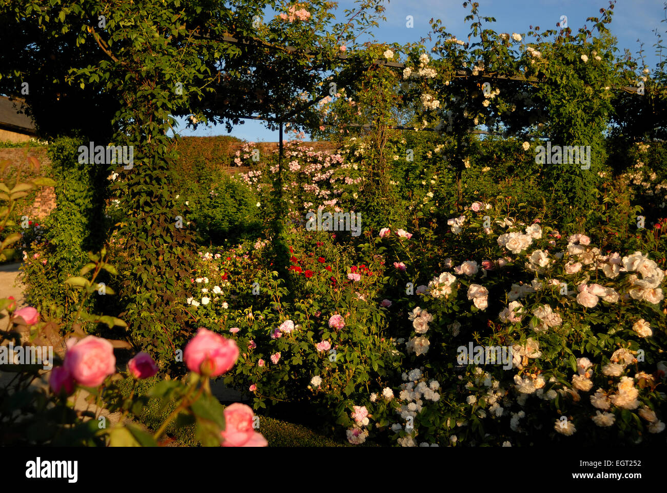 Rose Garden, The Alnwick Garden Stock Photo: 79204526 - Alamy