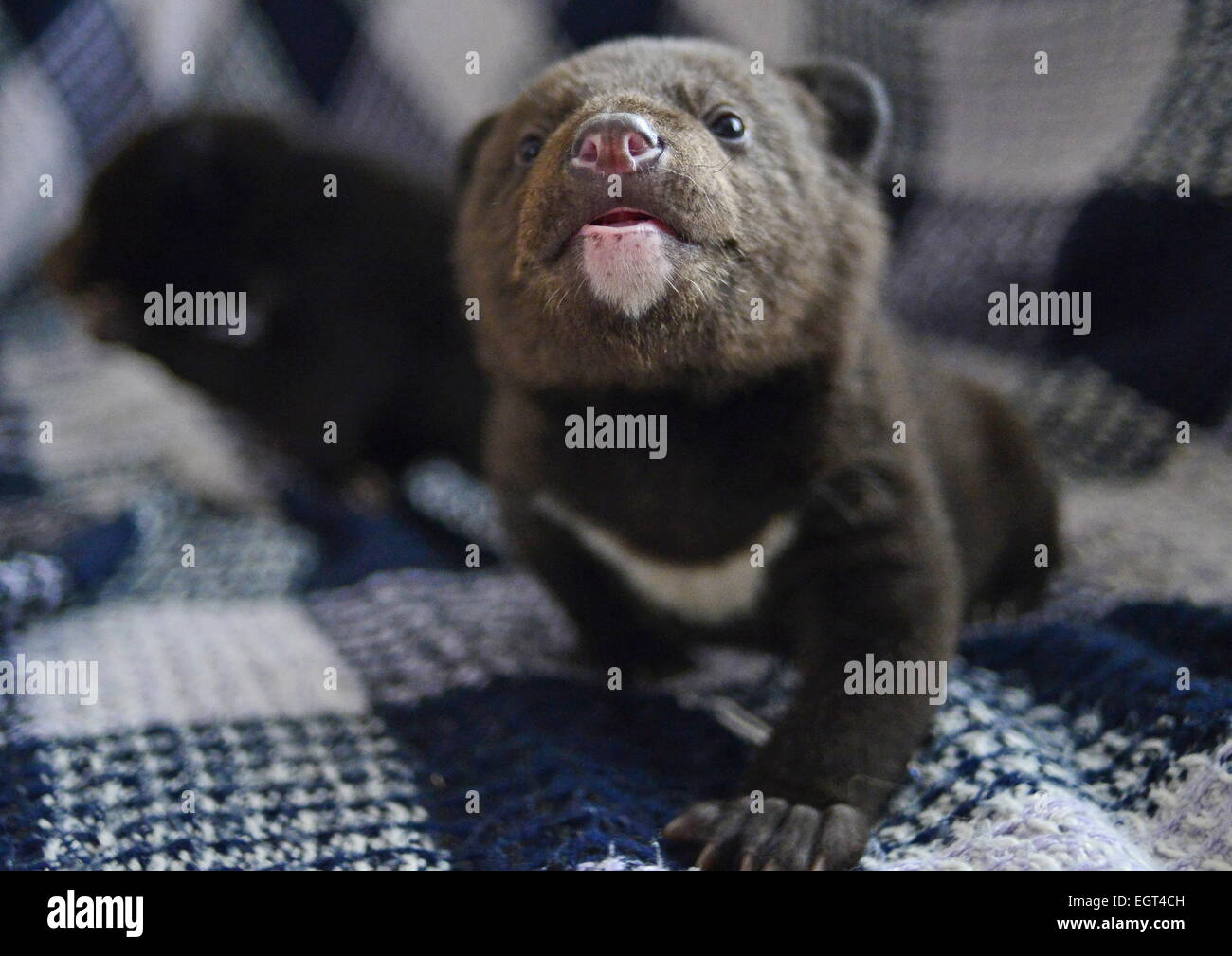 when are bear cubs born