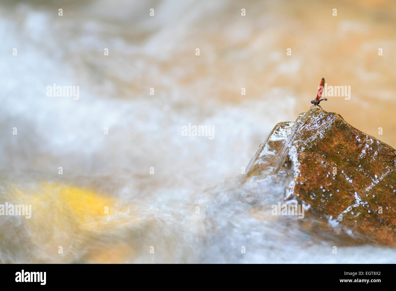 Dragonfly perched on rock in rainforest stream. Kaeng Krachan National Park. Thailand. Stock Photo