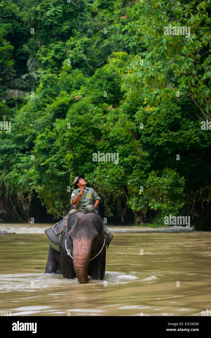 Elephant march in Gunung Leuser National Park, Sumatra, Indonesia. Stock Photo
