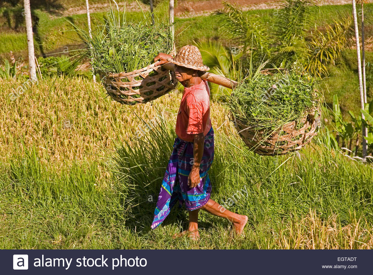 Tegalalang rice terraces, Bali, Indonesia - Stock Image