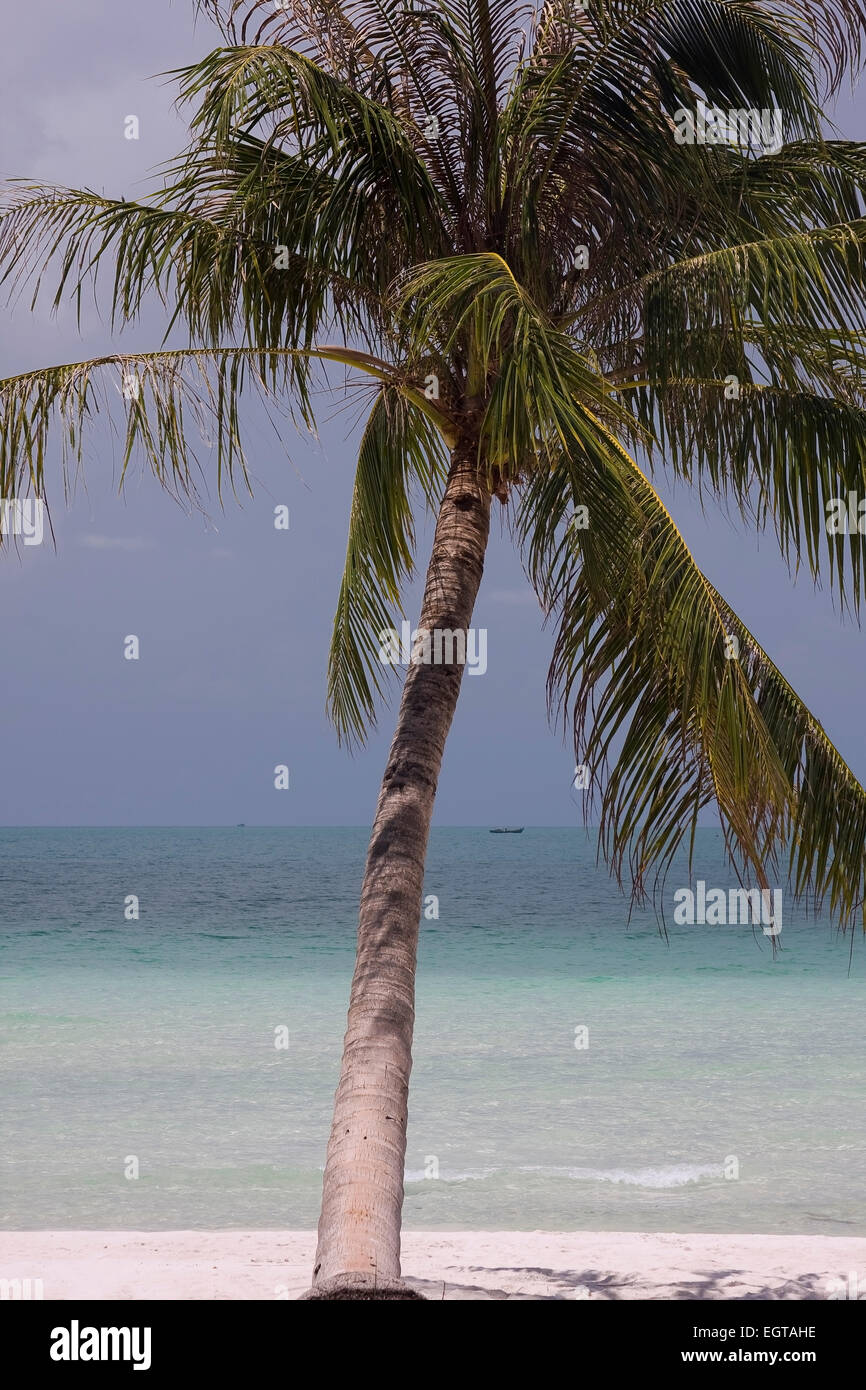 Palm beach on the island of Phu Quoc iland, Vietnam, Asia, South East Asia - Stock Image